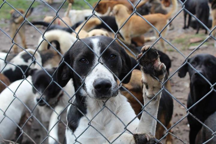 Al año suelen realizarse varias jornadas de adopción. Algunas se realizan en los parques de los barrios, los centros veterinarios o las tiendas para mascotas.