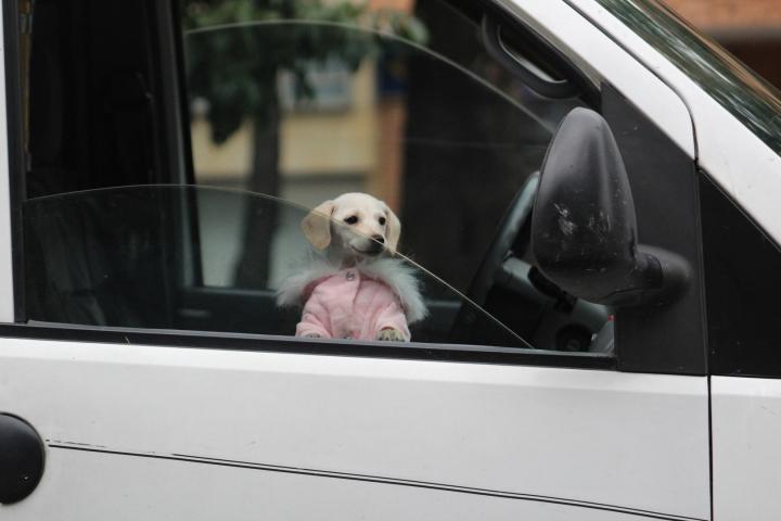 Esta perrita tiene tres meses y aun no se le ha otorgado un nombre, debido a que Alejandro y Sussy tienen la percepción de que al ponerle nombres a los cachorros, nadie los adopta.