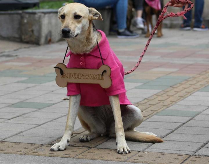 Ella se llama Púrpura y es uno de los animales callejeros que está en adopción en el Refugio de Milagrinos.